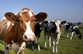 3 reasons why antibiotic use in animals could be harmful